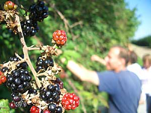 Berry-picking on the September leisurely ride
